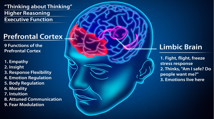 Picture of the responsibilities of the prefrontal cortex and limbic systems of the brain